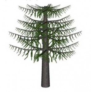 Drawn pine tree huge Plants Sketchup redwood Taxus Trees