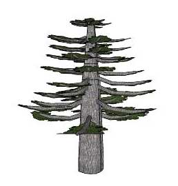 Drawn pine tree huge Sketchup sequoia tree Sequoiadendron/giant Plants