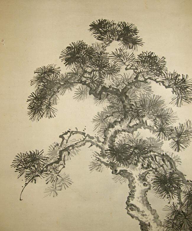 Drawn pine tree japanese  Matsu Pine ] 50080