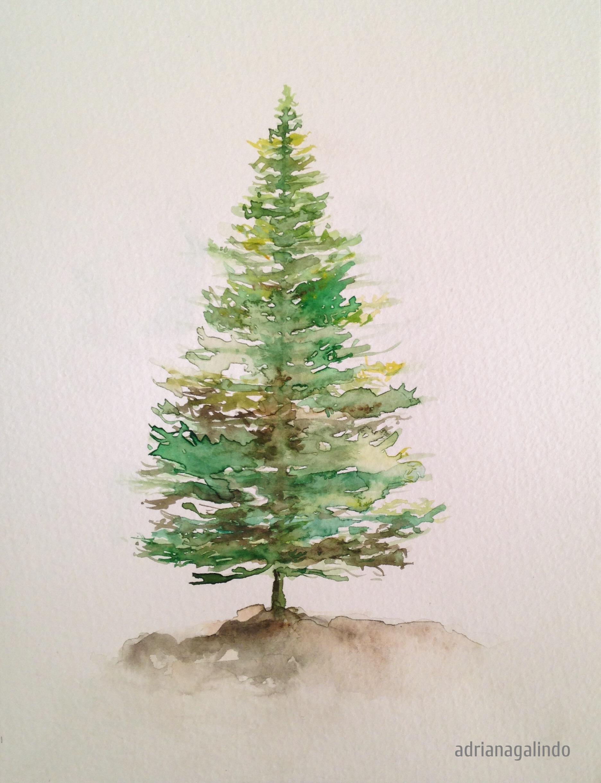 Drawn pine tree watercolor Pinheiro aquarela / 5 Digital