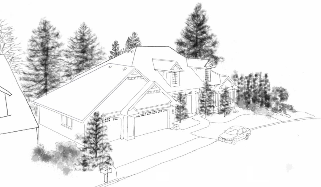 Drawn pine tree winter tree Draw Pine How  Development: