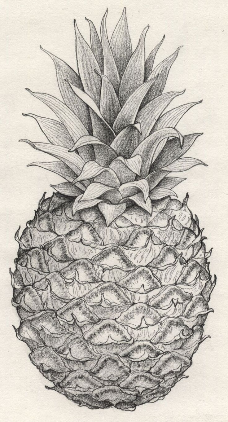 Drawn pencil fruit Pineapple represent obsession ideas Pinterest