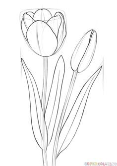 Drawn rose beginner Tutorials a How Drawing to
