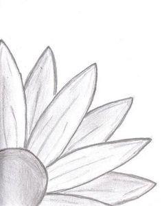 Drawn still life bad Try  Beginners Daisy Nature