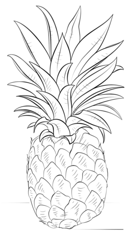 Pineapple clipart coloring page And Pineapple Pages Drawing Coloring