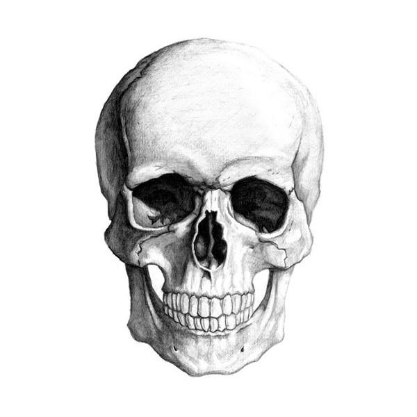 Drawn sleleton head bone More! To  How on