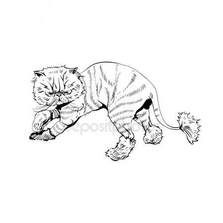 Drawn pirate persian Royalty Hand cat cat