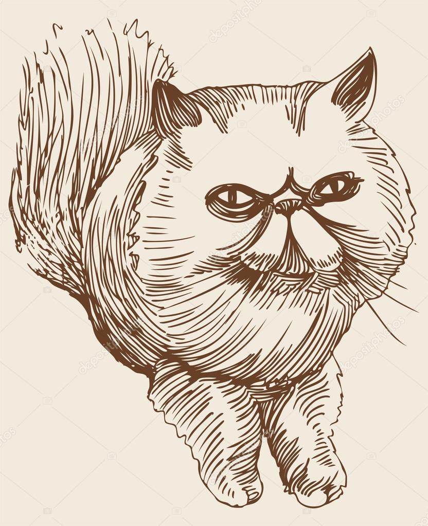 Drawn pirate persian Vector Hand Cat #3989907 cat
