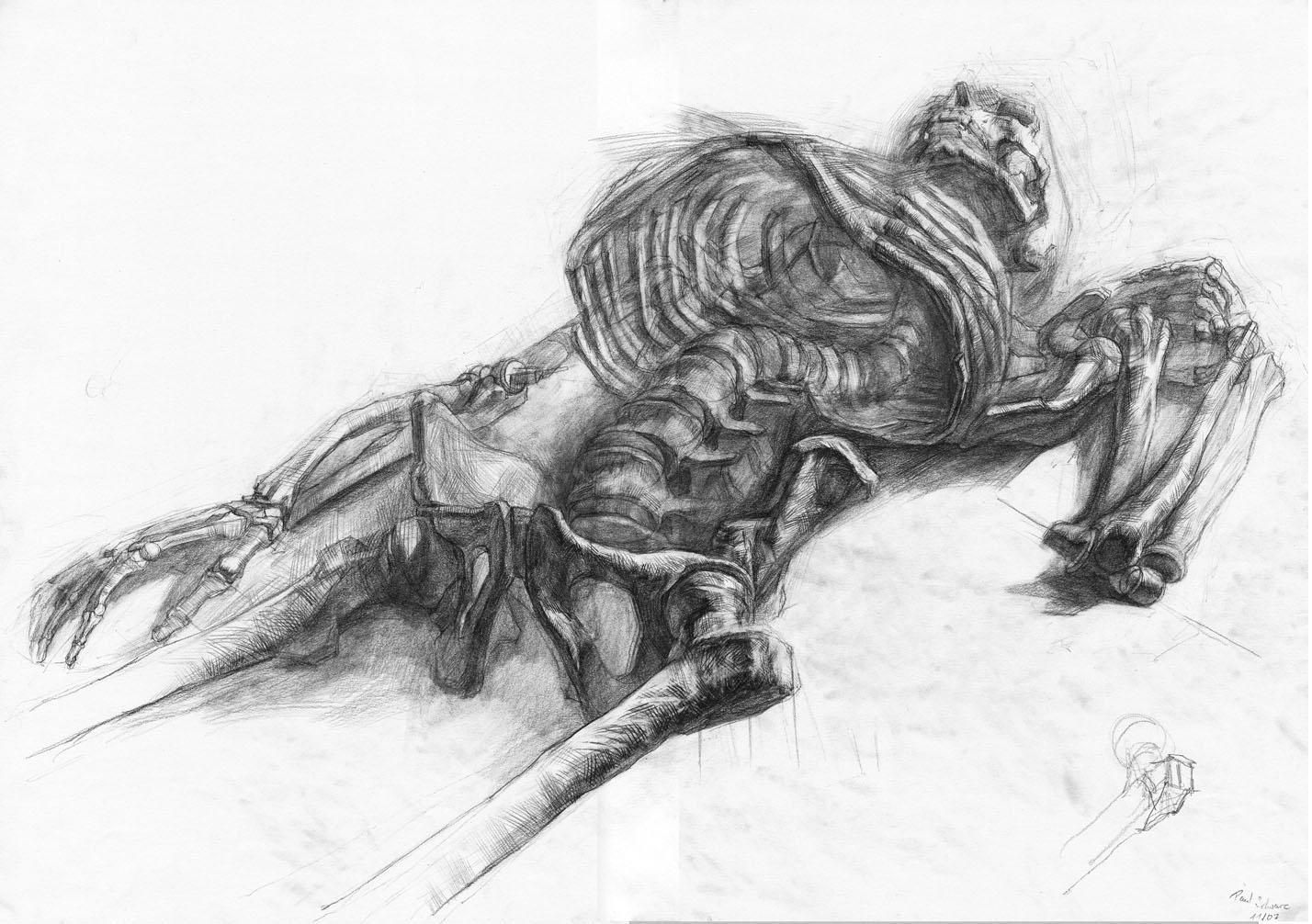 Drawn skeleton realistic Posted – Schwarz Artlog realistic