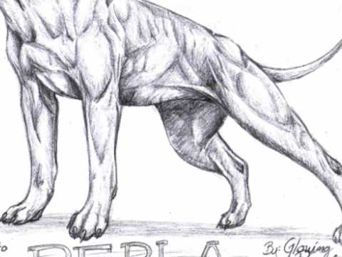 Drawn pitbull  YouTube Perla Pitbull drawing