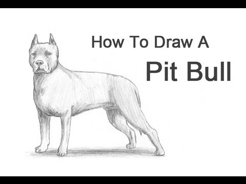 Drawn pit bull (Pit to Draw How Dog