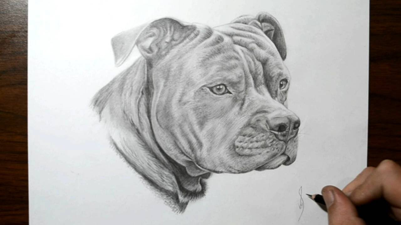 Drawn pitbull Pit  Dog How Draw