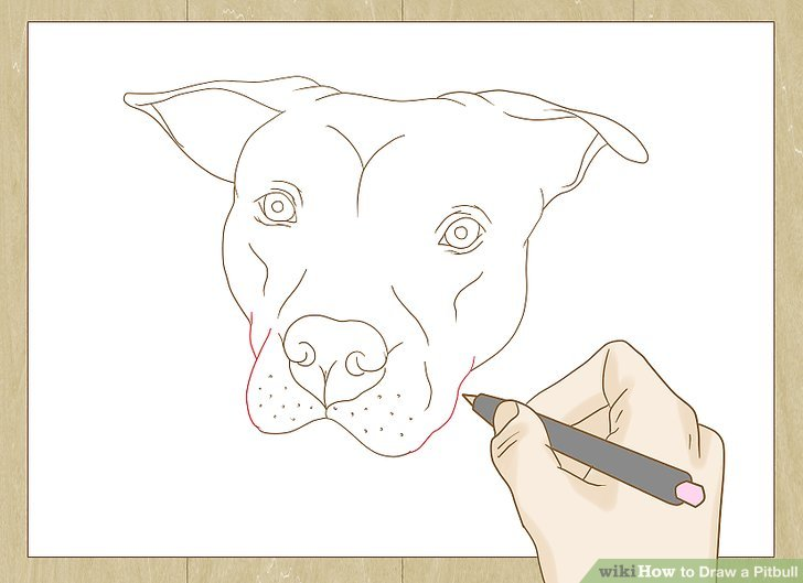 Drawn pitbull 23 Image Step Pictures) titled