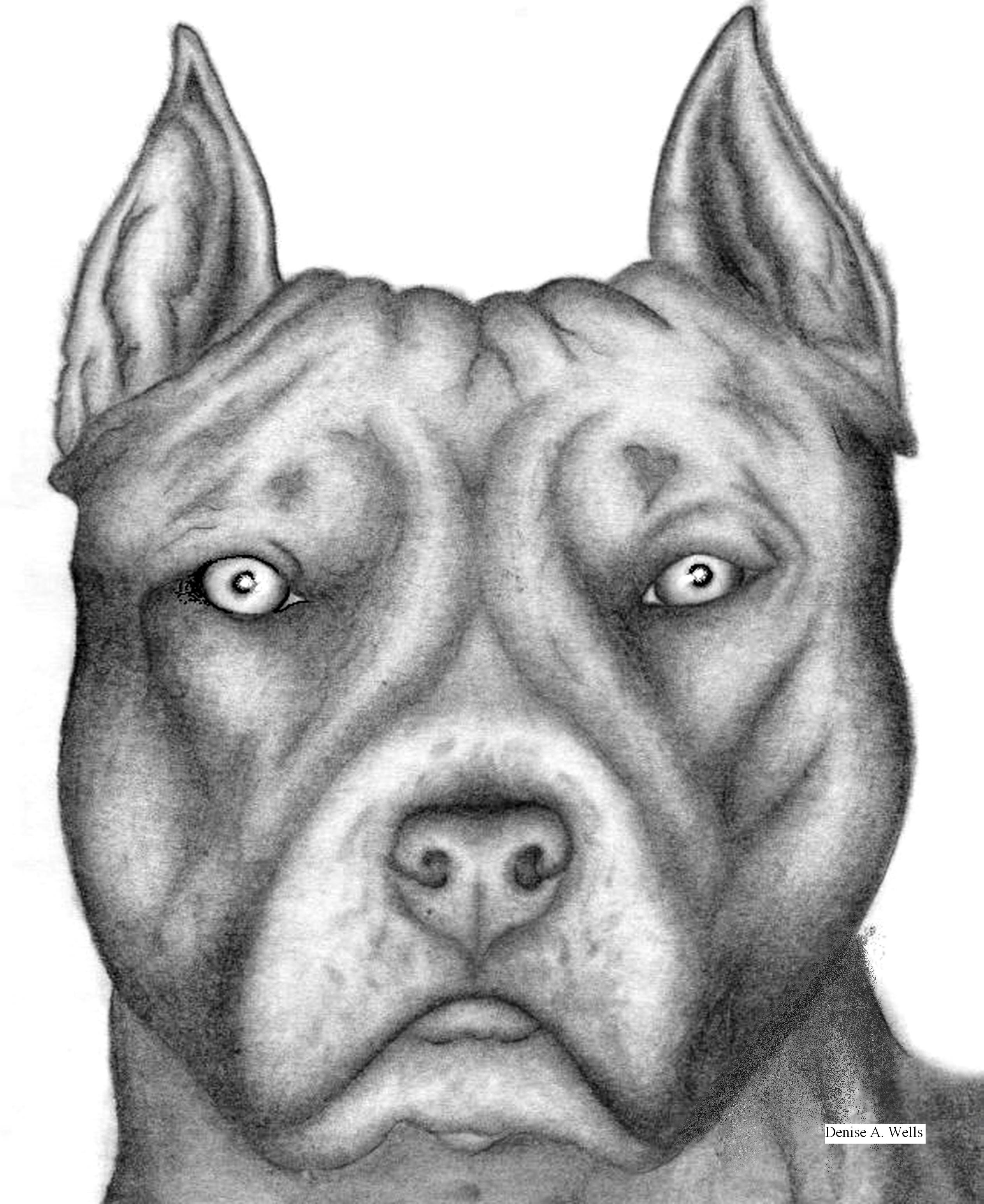 Drawn pitbull And  Dogs Tutorial Drawing