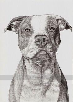Drawn pit bull american bully Ideas Pitbull Dog Bullies Pitbull