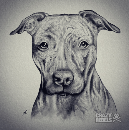 Drawn pit bull american bully Drawn #dog love #pitbull American