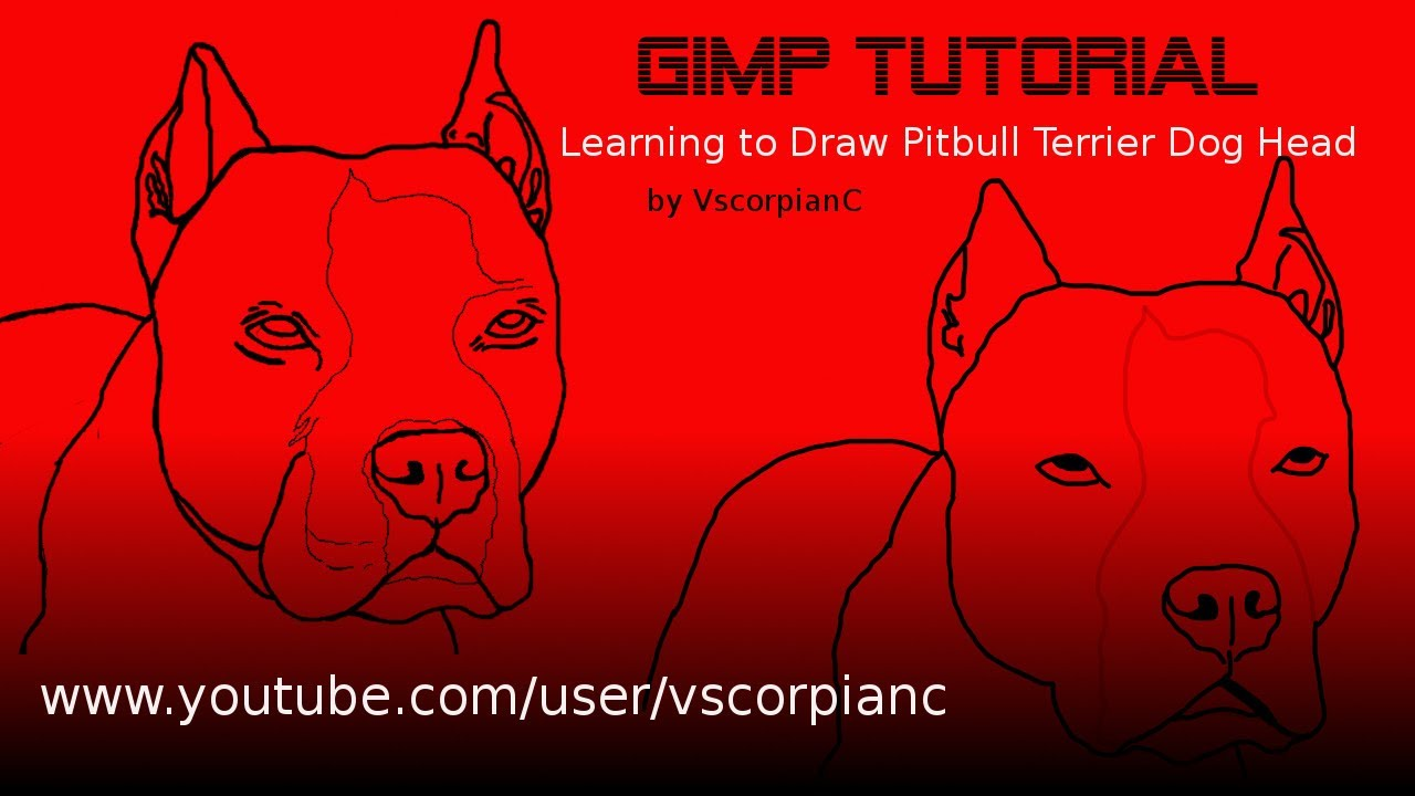 Drawn pit bull american bully Terrier Pit Tutorial by Dogs