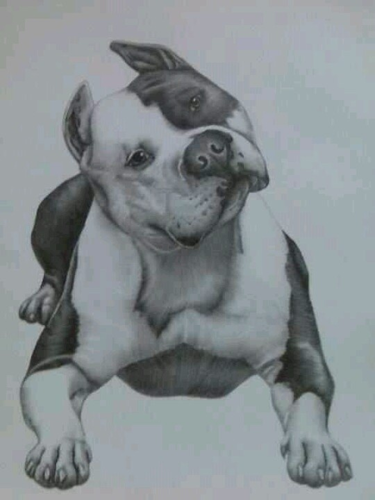 Drawn pit bull american bully Drawing Pinterest on Best incredible