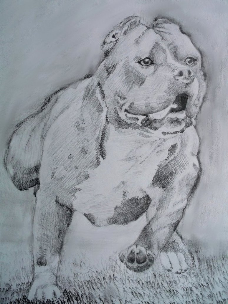 Drawn pitbull pencil drawing By sadlion American Terrier sadlion