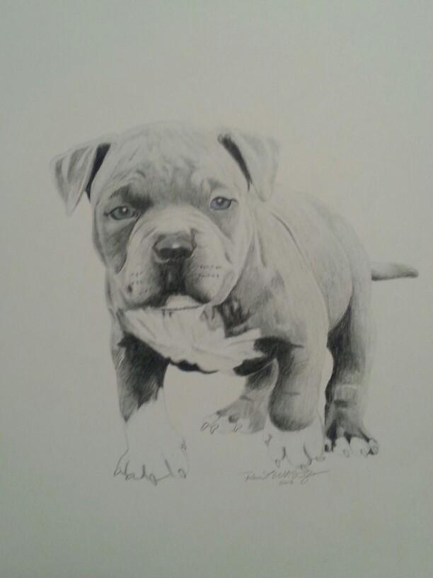 Drawn pit bull american bully Pitbull w wypróbowania Szukaj Reco