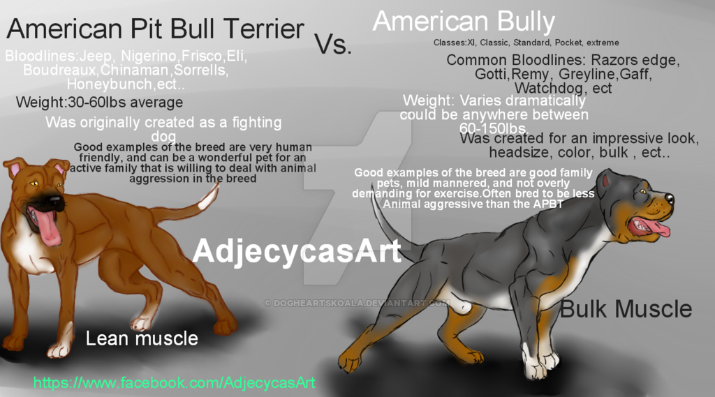 Drawn pit bull american bully  bull Pit Bully DogHeartsKoala