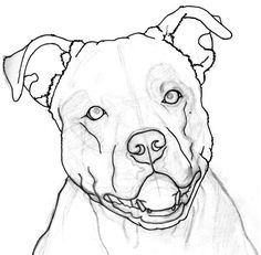 Pitbull clipart draw a Search Google a how &
