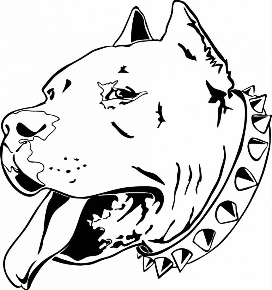 Pitbull clipart coloring page Colouring Awesome Free Colouring Pages