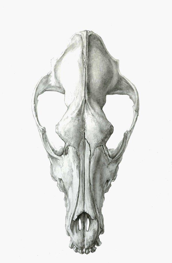 Anatomy clipart animal skull Dog Best by Pinterest Dog