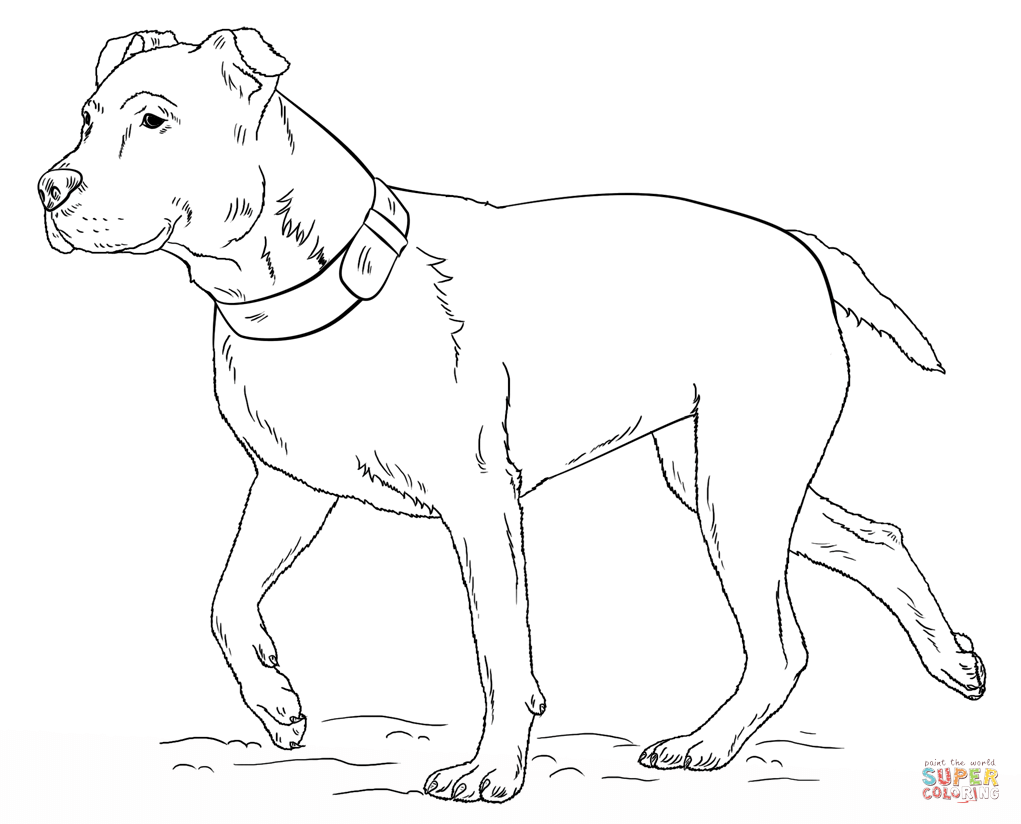 Pitbull clipart coloring page Bull Pit Bull coloring coloring