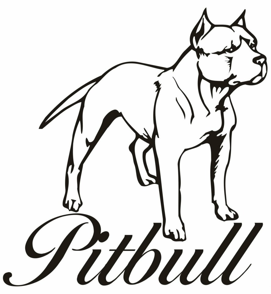 Pitbull clipart coloring page Download to free and pages