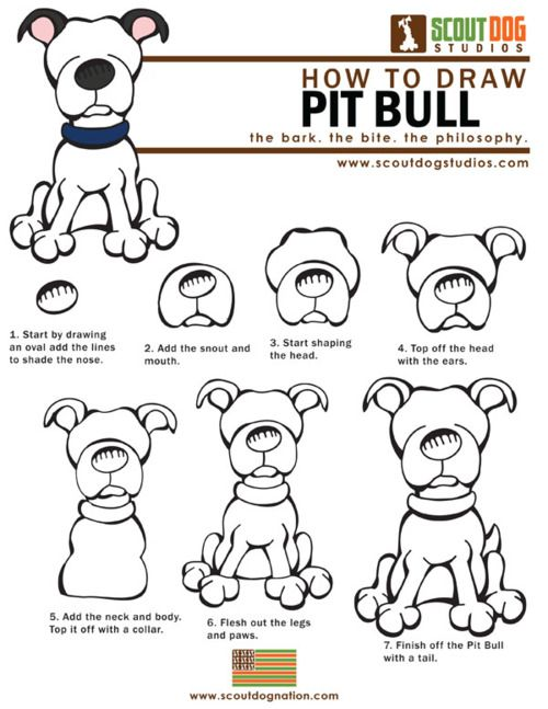 Pitbull clipart draw a To How Pit How Download