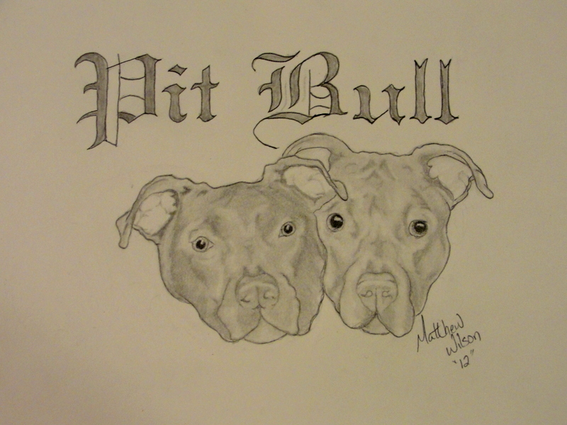 Drawn pitbull pencil drawing Pit Jul Drawing Drawing Bull