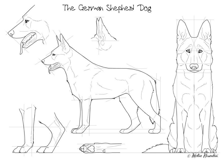 Drawn pit bull german shepherd German Dog The on on