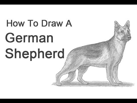 Drawn pit bull german shepherd  (German Shepherd) Dog Draw