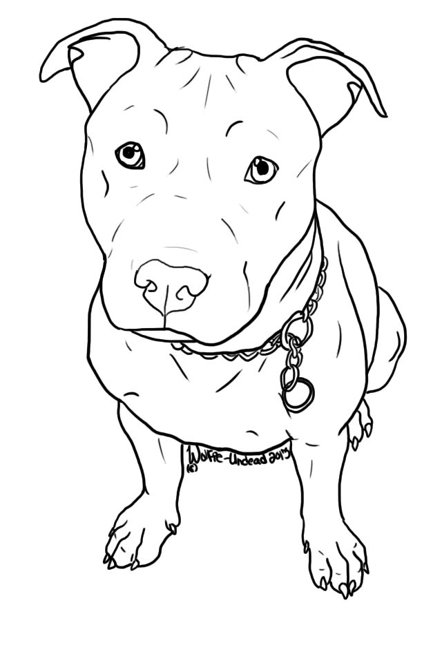 Pitbull clipart pitbul Lineart! Best ^ Free RULES
