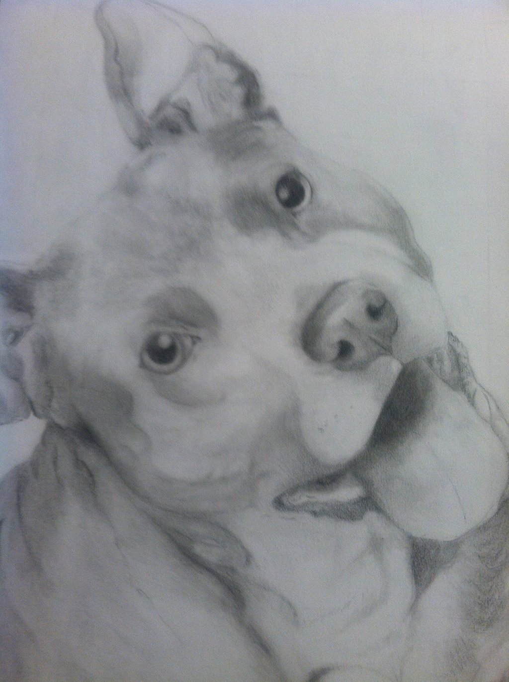 Drawn pitbull pencil drawing Bull Terrier Kennelsx xMush Pencil