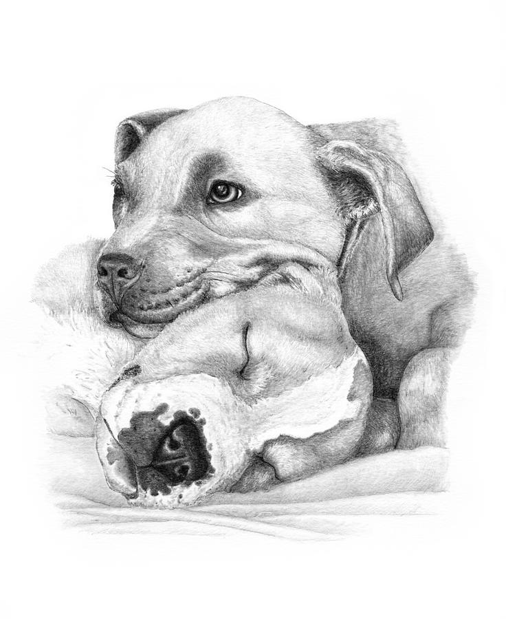 Drawn pitbull pencil drawing And adults Drawings on Coloring