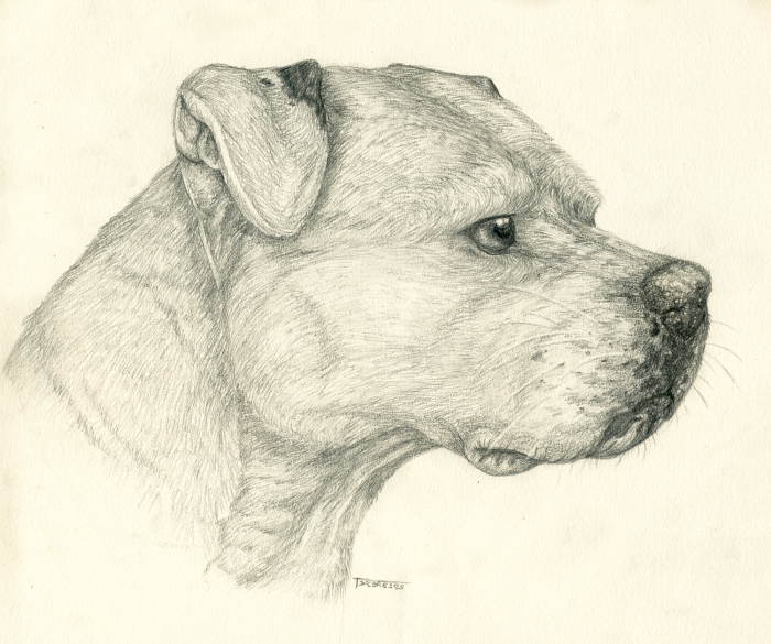 Drawn pitbull pencil drawing Pitbull A Version jpg Sketch