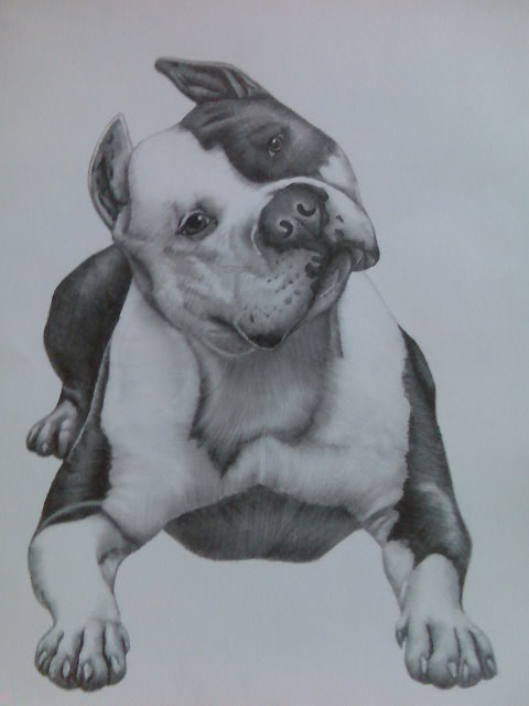 Drawn pitbull spoiled On @deviantART Pitbull Dog by