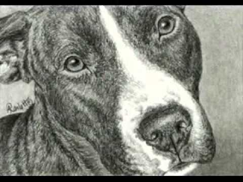 Drawn pitbull pencil drawing A Terrier Drawing Bull Pit