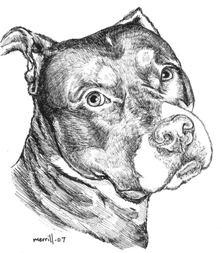 Drawn pit bull pitbul Save of  by of