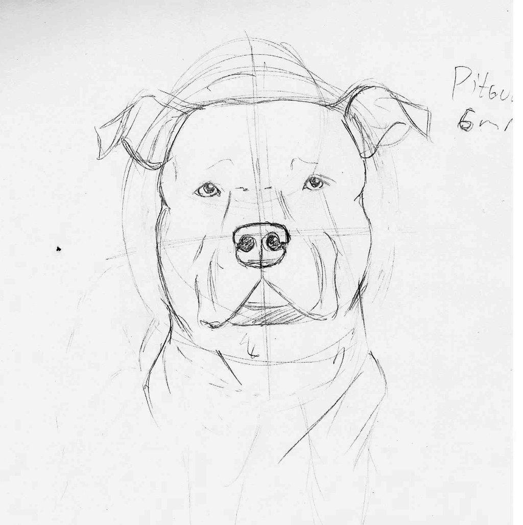 Drawn pit bull pitbul Google draw how face draw