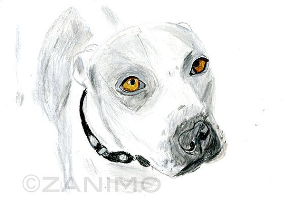 Drawn pit bull pitbul 33 pitbull Grey of by