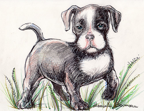 Drawn pit bull pitbul Dog Cute Cute drawing Dog