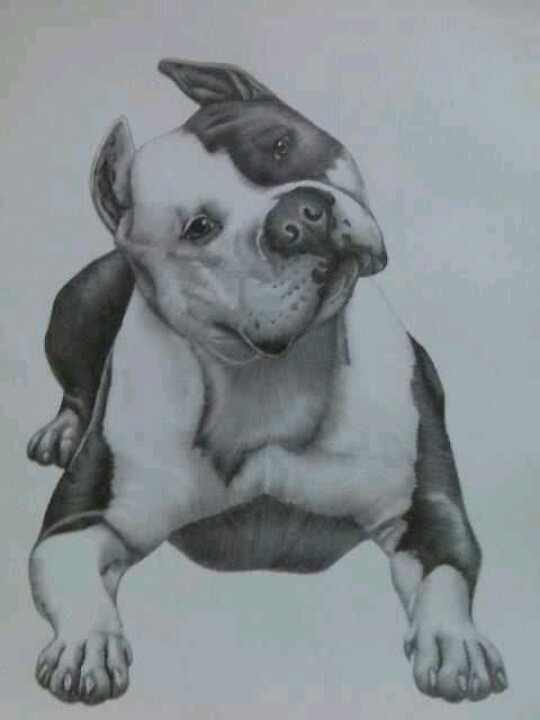 Drawn pitbull pencil drawing Fantasy & incredible and incredible