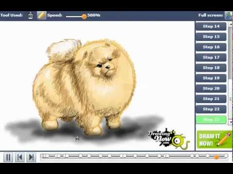 Drawn pit bull pomeranian To Pomeranian a How Pomeranian