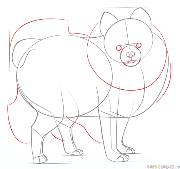 Drawn pit bull pomeranian Dog step to Step draw