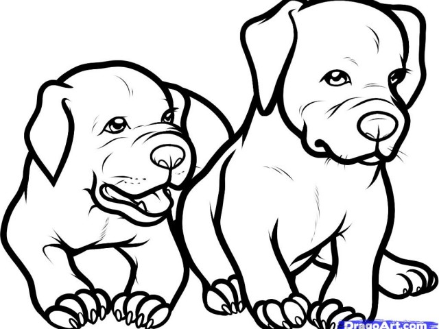 Pitbull clipart draw a By Step A How chi