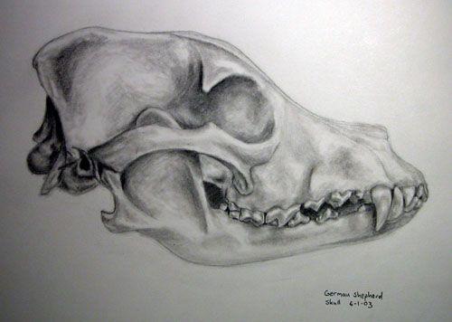 Drawn pit bull skull Skull drawing Ideas Pinterest Canine