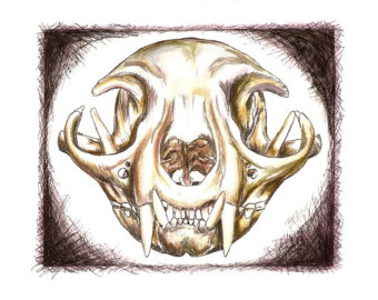 Drawn pit bull skull Art Cat's Original art drawing